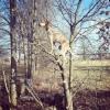 Maddie o cachorro equilibrista XV