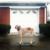 Maddie o cachorro equilibrista XVI