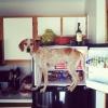 Maddie o cachorro equilibrista XX