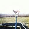 Maddie o cachorro equilibrista XXIII