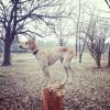 Maddie o cachorro equilibrista XXIV