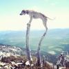 Maddie o cachorro equilibrista XXV