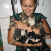 Colecionando gatos...