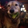 Cão vegetariano...