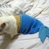 Peixes!