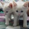Gêmeos!