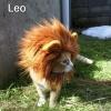 Leão!