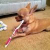 Hora de escovar os dentinhos...