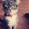 Gato intelectual!