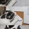 Gato sacana...