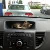 Passageiro clandestino!