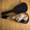 Cão violão...