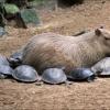 Tartarugas carentes...