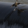 Praticando surf!