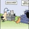 Pet felino!