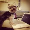 Um cão executivo!