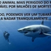 O animal mais perigoso do mundo ...