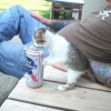 Gato pinguço...