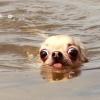 Que água fria...