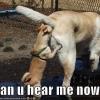 Pode me ouvir agora?