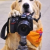 Paparazzo animal...