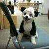 Primo do Panda...