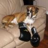 O verdadeiro boxer!