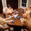 Uma bela partida de Poker!