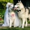 Eu vos declaro marido e mulher...