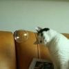 Intrigado com a bolha...