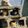 Condomínio felino
