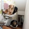 Elevador de cachorro...