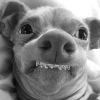 Sorriso perfeito....