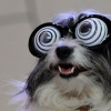 Hipnose animal!