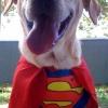 O super-cão