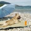 Ah! Vida de cão!