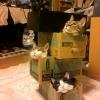 Pirâmide felina...