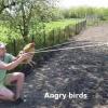 Angry birds na vida real!