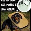 Cachorro de pobre...