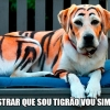 Vou mostrar que sou tigrão...