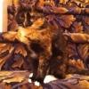 Bela camuflagem...