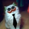 Gato coringa...