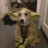 Yoda - O mestre!