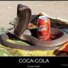 Vai uma coca-cola?