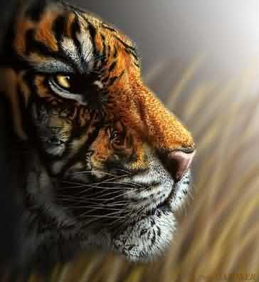 Quantos tigres???