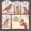A tradução do canto dos pássaros!