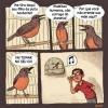 Traduzindo o canto dos pássaros!